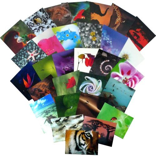Great value greetings card collection. 30 Carbon Neutral 'The Natural World' cards (all different designs).