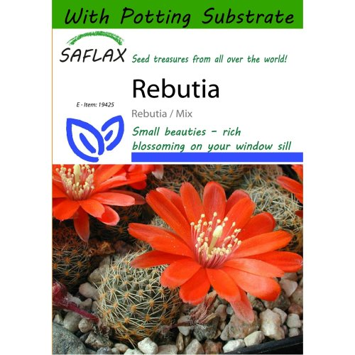Saflax  - Rebutia - Rebutia / Mix - 40 Seeds - with Potting Substrate for Better Cultivation
