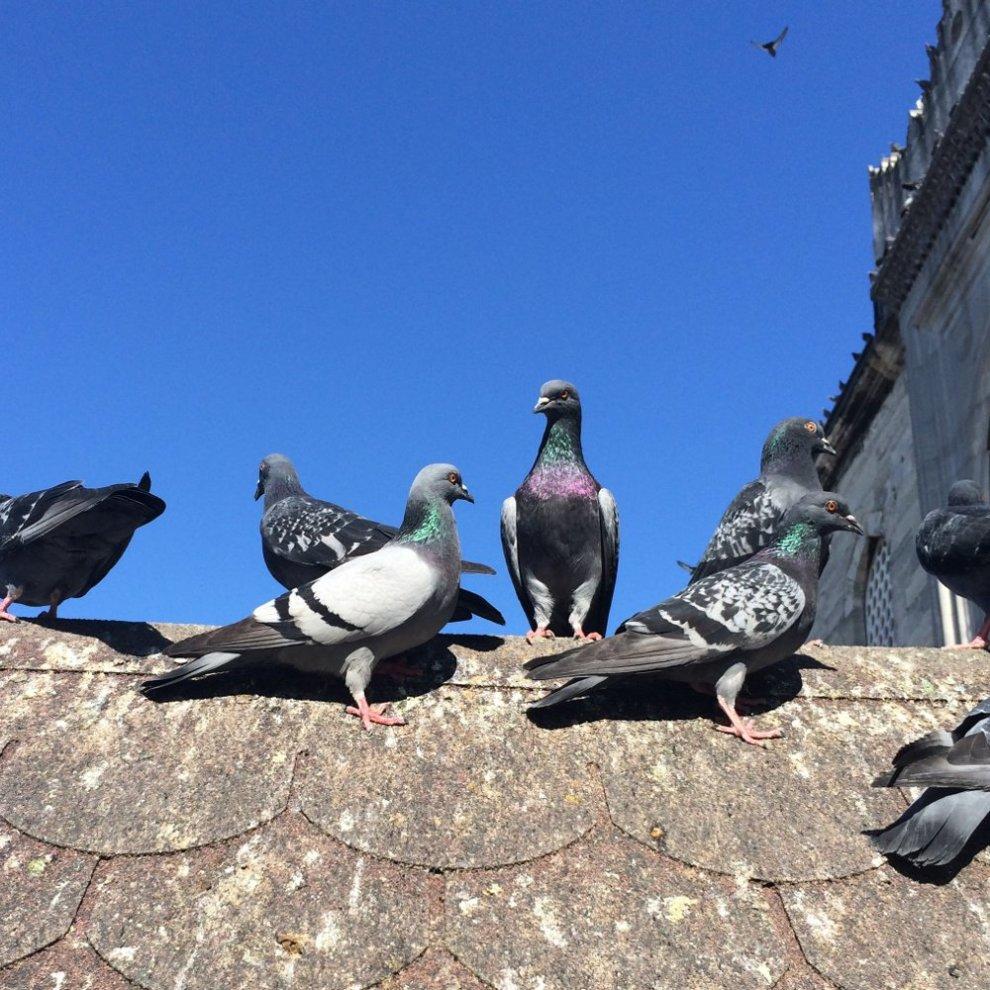 ISOTRONIC Bird Pigeon Animal Repeller Portable Deterrent Repellent Scarer