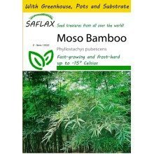 Saflax Potting Set - Moso Bamboo - Phyllostachys Pubescens - 20 Seeds - with Mini Greenhouse, Potting Substrate and 2 Pots