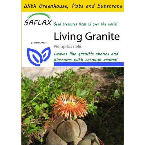 Saflax Potting Set - Living Granite - Pleiopilos Nelii - 40 Seeds - with Mini Greenhouse, Potting Substrate and 2 Pots