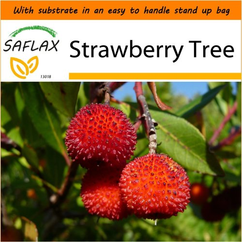 SAFLAX Garden in the Bag - Strawberry Tree - Arbutus - 50 seeds