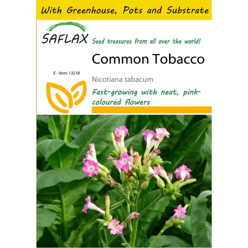Saflax Potting Set - Common Tobacco - Nicotiana Tabacum - 250 Seeds - with Mini Greenhouse, Potting Substrate and 2 Pots