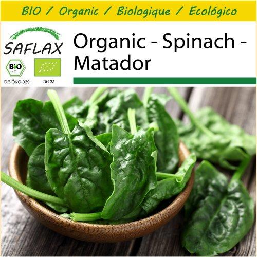 SAFLAX Potting Set - Organic - Spinach - Matador - 300 certified organic seeds  - Spinacia